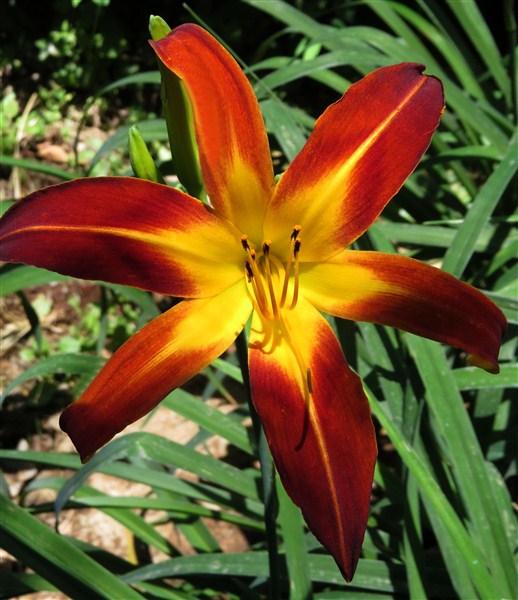 Mooiplaas Iris & Daylilies